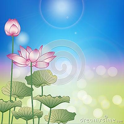Lotus flower under the sun