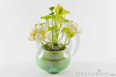 Lotus in flowerpot