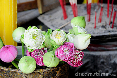 Lotus flowers and blossoms