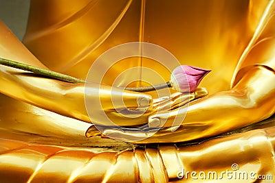 Lotus in hand of buddha