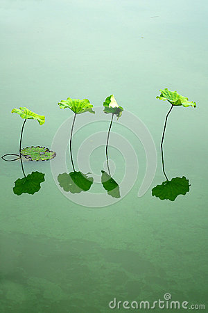 Free Lotus Leaf Stock Photo - 41772870