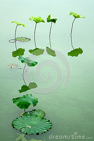Free Lotus Leaf Stock Images - 41773294