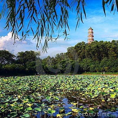 Lotus pond landscape