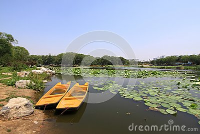 Lotus pond scenery in a park