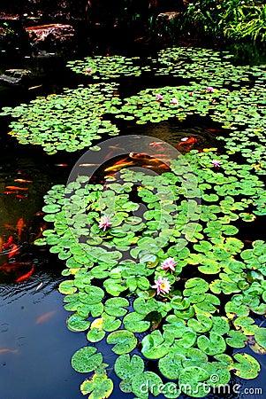 Lotus pond in spring rain