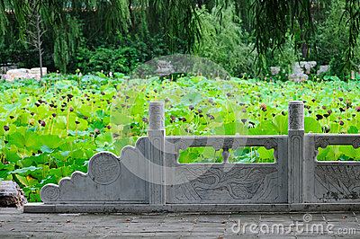 Lotus pond and white marble railings