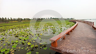 Lotus pond with zigzag wooden bridge