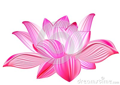 Lotus realistic vector illustration