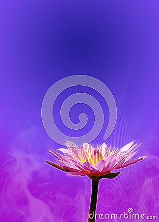 Lotus Template 1