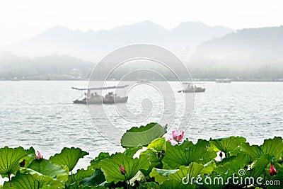 Lotus in West lake, Hangzhou
