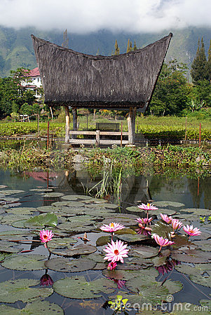 Lotuses and house