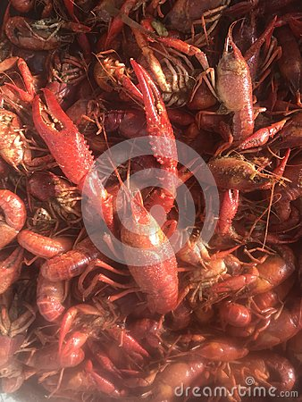 Free Louisiana Crawfish In A Boiling Pot. Royalty Free Stock Photo - 113400705
