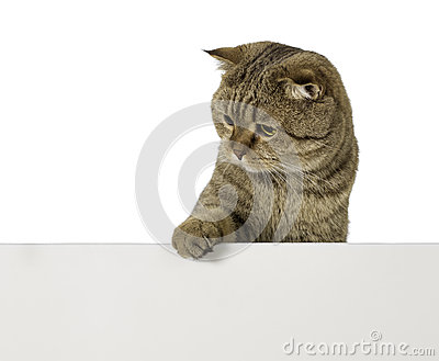 Lovable cat over empty plastic board with free space for your text