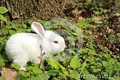 Lovable rabbit