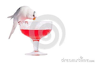 Love Bird on Cocktail