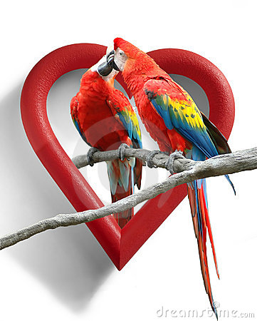 Free Love Birds Stock Images - 3074644