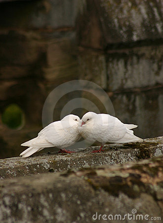 Free Love Birds Stock Image - 664011