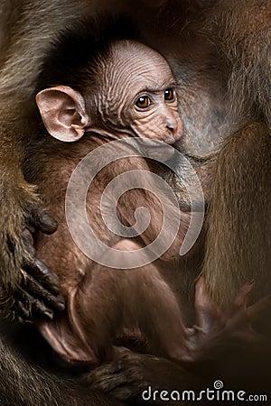 Portrait of small baby monkey