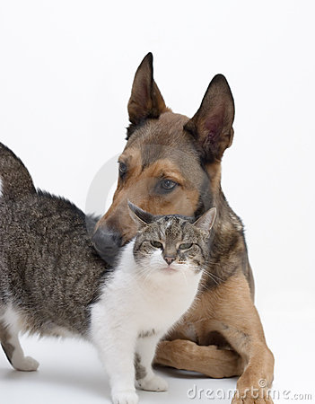 Love between Dog & Cat