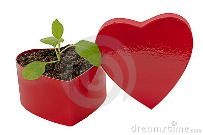 Love Grows Heart Shaped Box