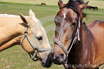 Love Horses on the green Field