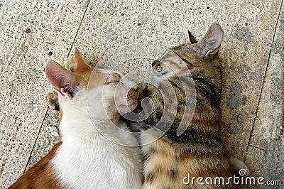 love, love, cats