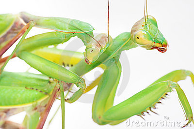 Love, mantises