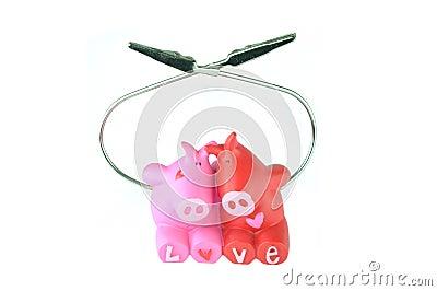 Love of pigs