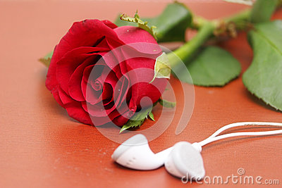 Love, rose, romantic music concept