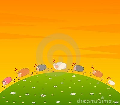 Love sheep pursues after other