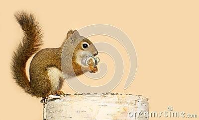 Love struck squirrel.