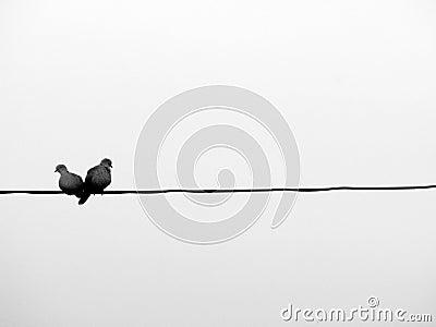Lovebirds en un alambre