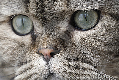 Lovely face of the cat.