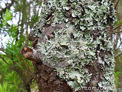 Lovely Lichen Free Public Domain Cc0 Image