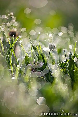 Lovely morning dew