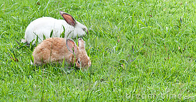 Lovely rabbits in Thailand Yard