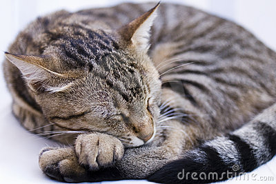 Lovely Sleeping Cat