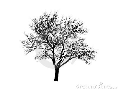 Lovely tree silhouette