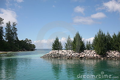A lovely view of firs on the sea