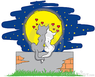 Lover cats on a brick wall