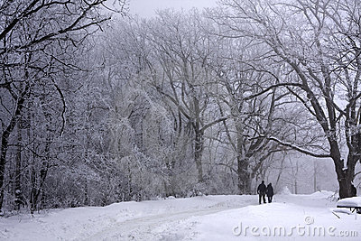 Lovers walking in the beautiful winter woods