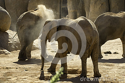Loving Elephant