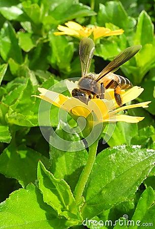 Loving Nectar