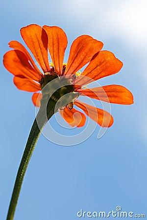 Low angle of orange flower