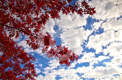 Low Angle Photography Of Red Leaf Tree Under Cloudy Blue Sky During Daytime Free Public Domain Cc0 Image