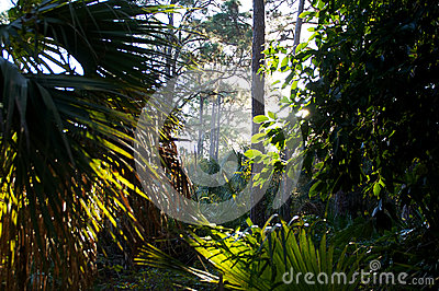 Low angle view through tropical forest