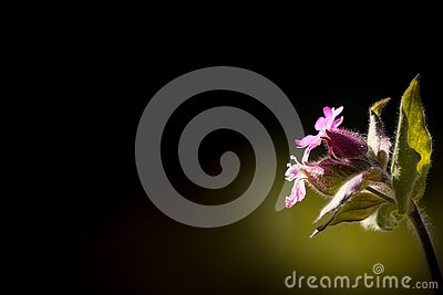 Low Pink Petal Flower With Green Leaves Free Public Domain Cc0 Image