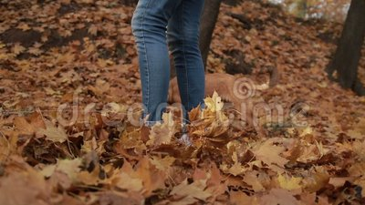 Hipster girl taking dog for walk in autumn stock video footage