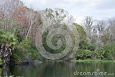 Lower Wekiva River State Park, Florida, USA