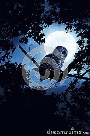 Lua cheia de Owl Watches Intently Illuminated By na noite de Dia das Bruxas